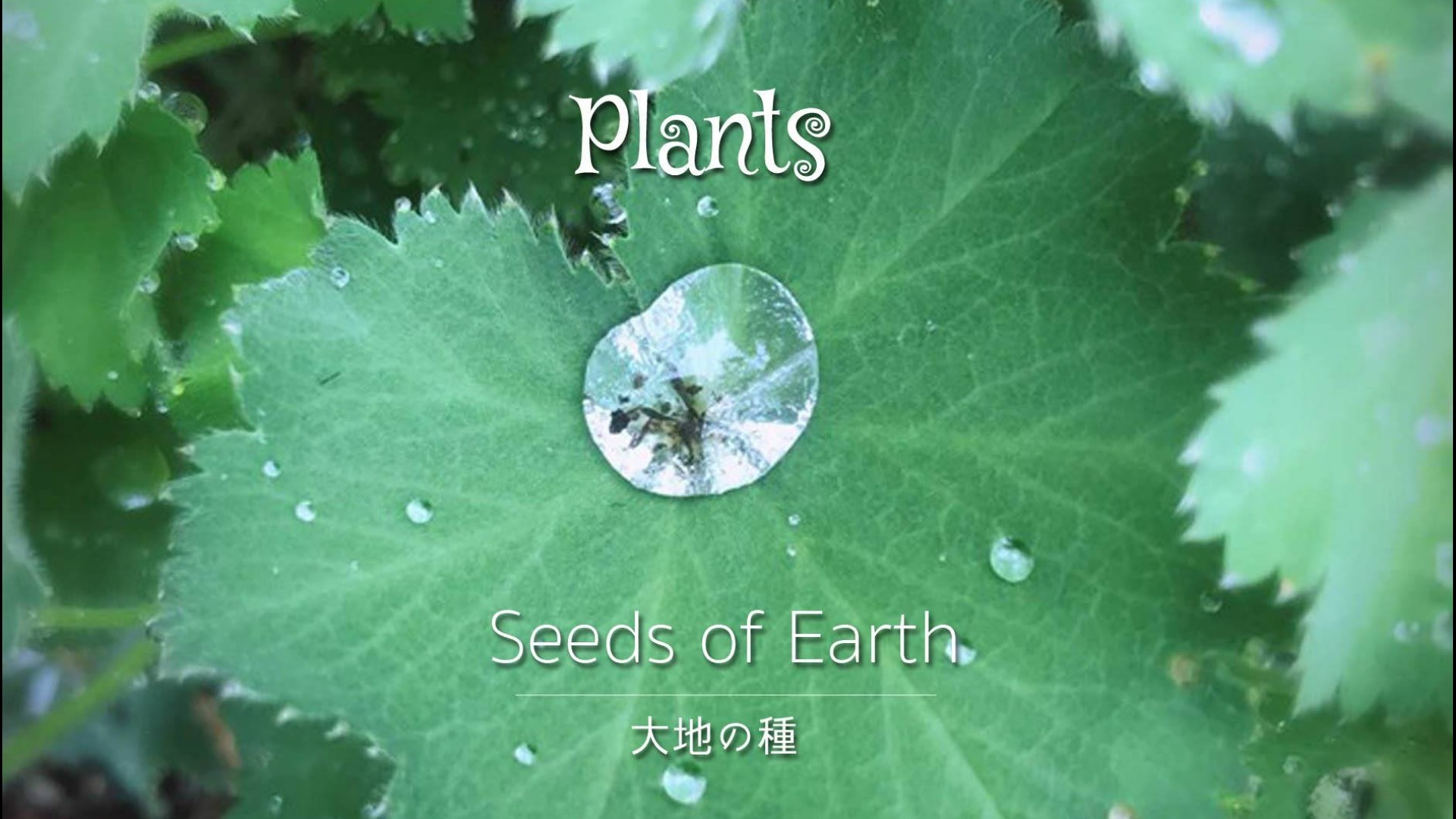 Mini Album 「Plants」 大地の種インタビューPDF