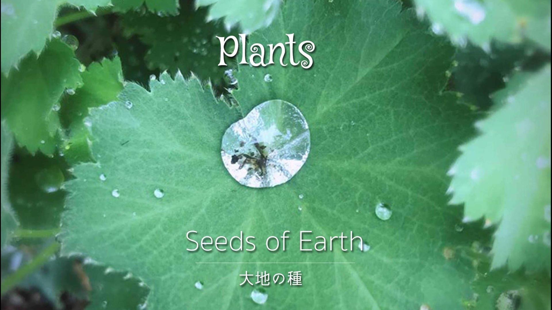 ミニアルバム『Plants』無償ダウンロードプレゼント