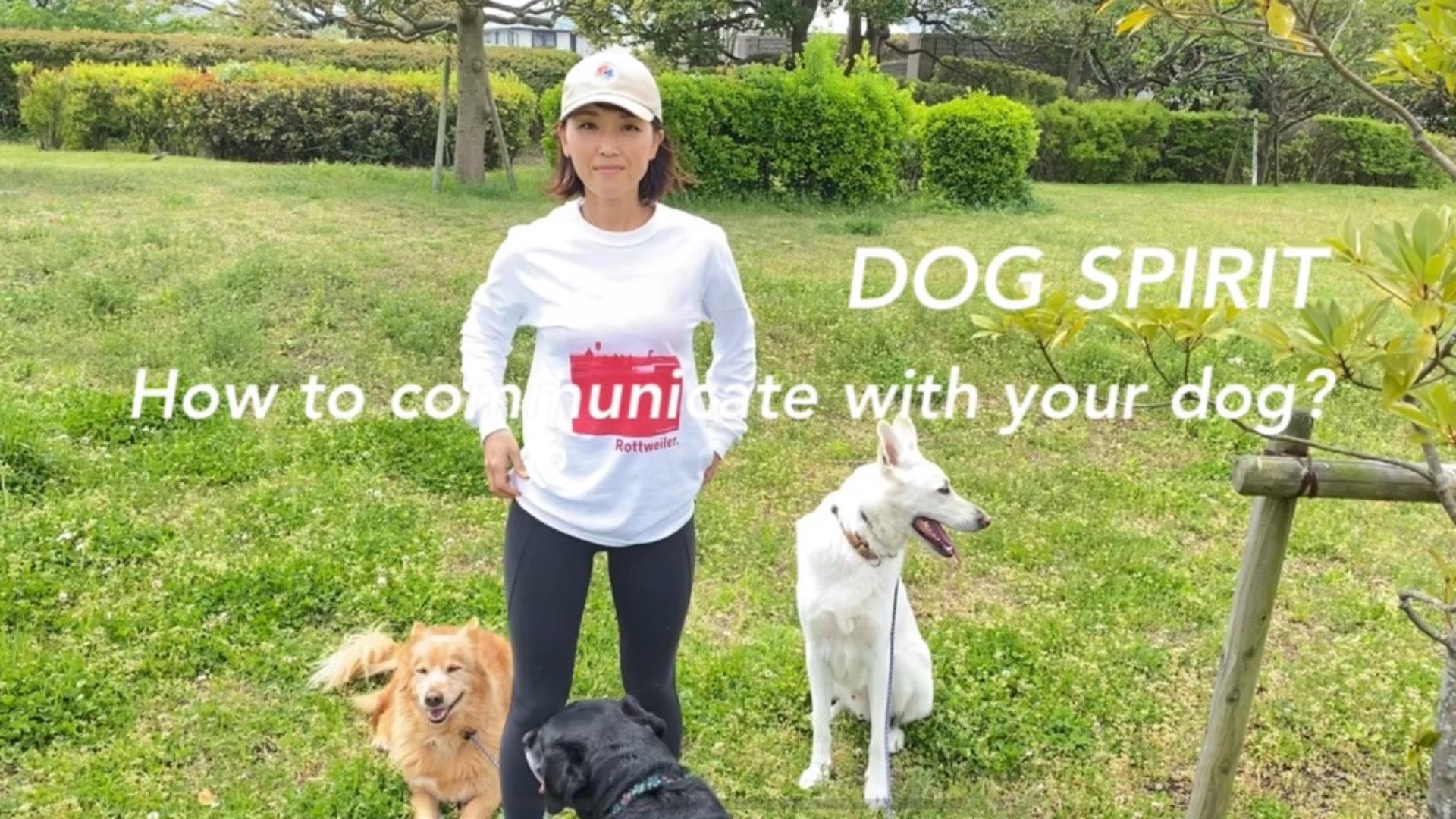犬とのコミュニケーション方法