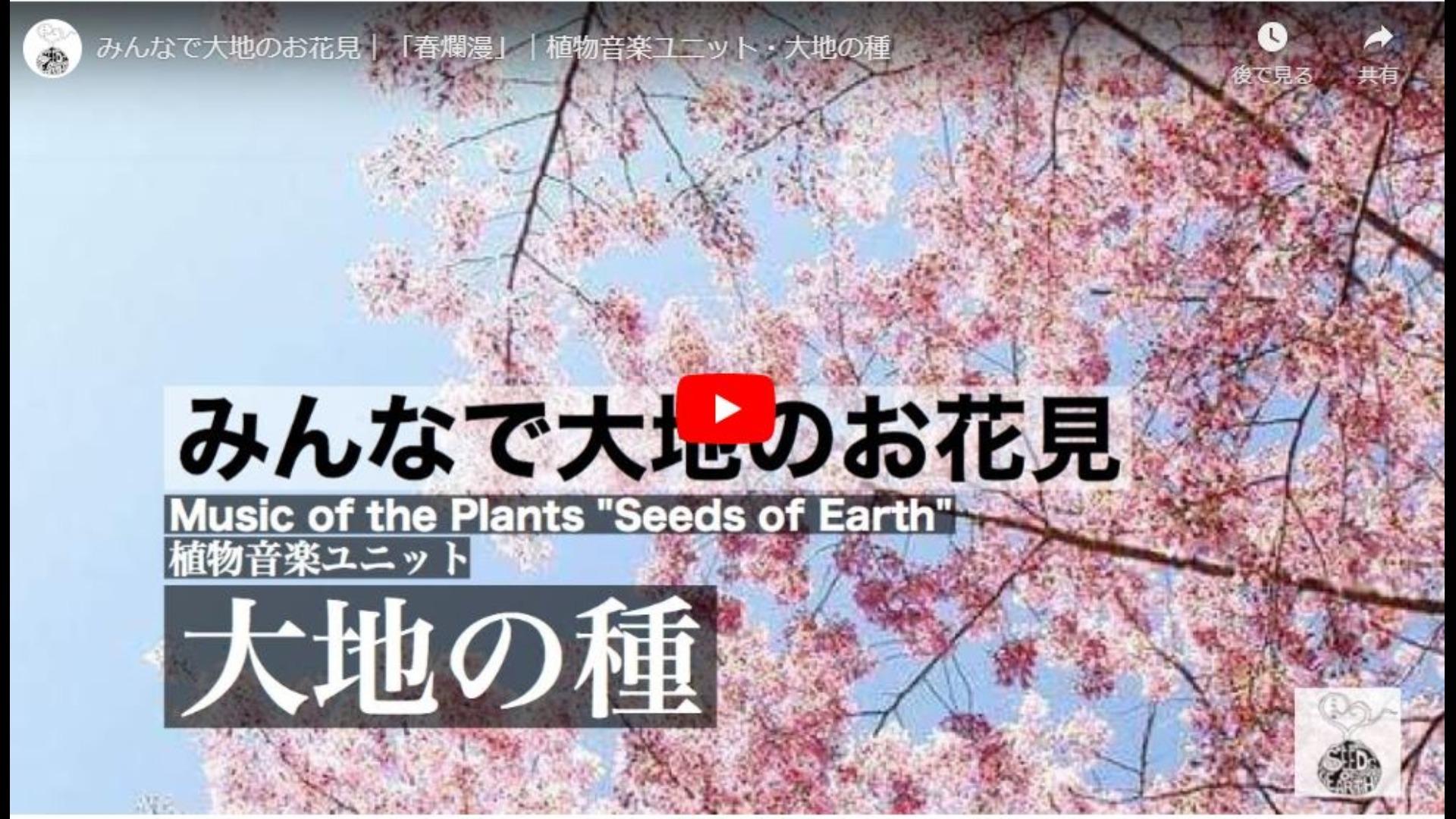 大地の種オリジナル楽曲「春爛漫」無償ダウンロード