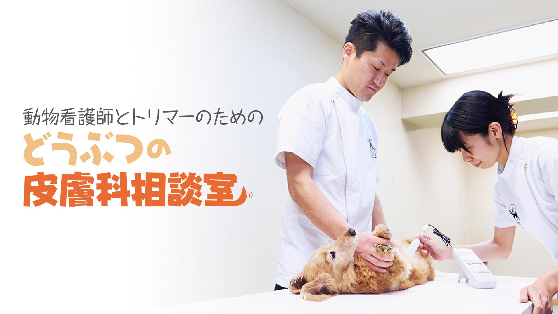 動物看護師とトリマーのための『どうぶつの皮膚科相談室』