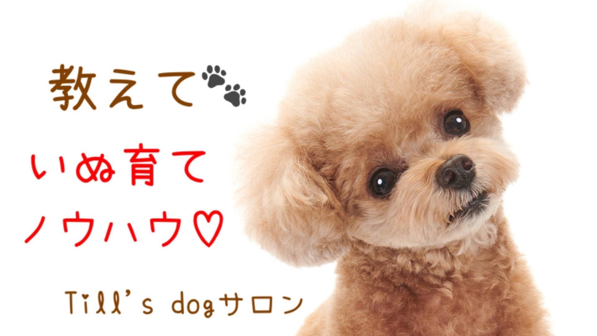 教えて☆いぬ育てノウハウ♡ Till's dogサロン