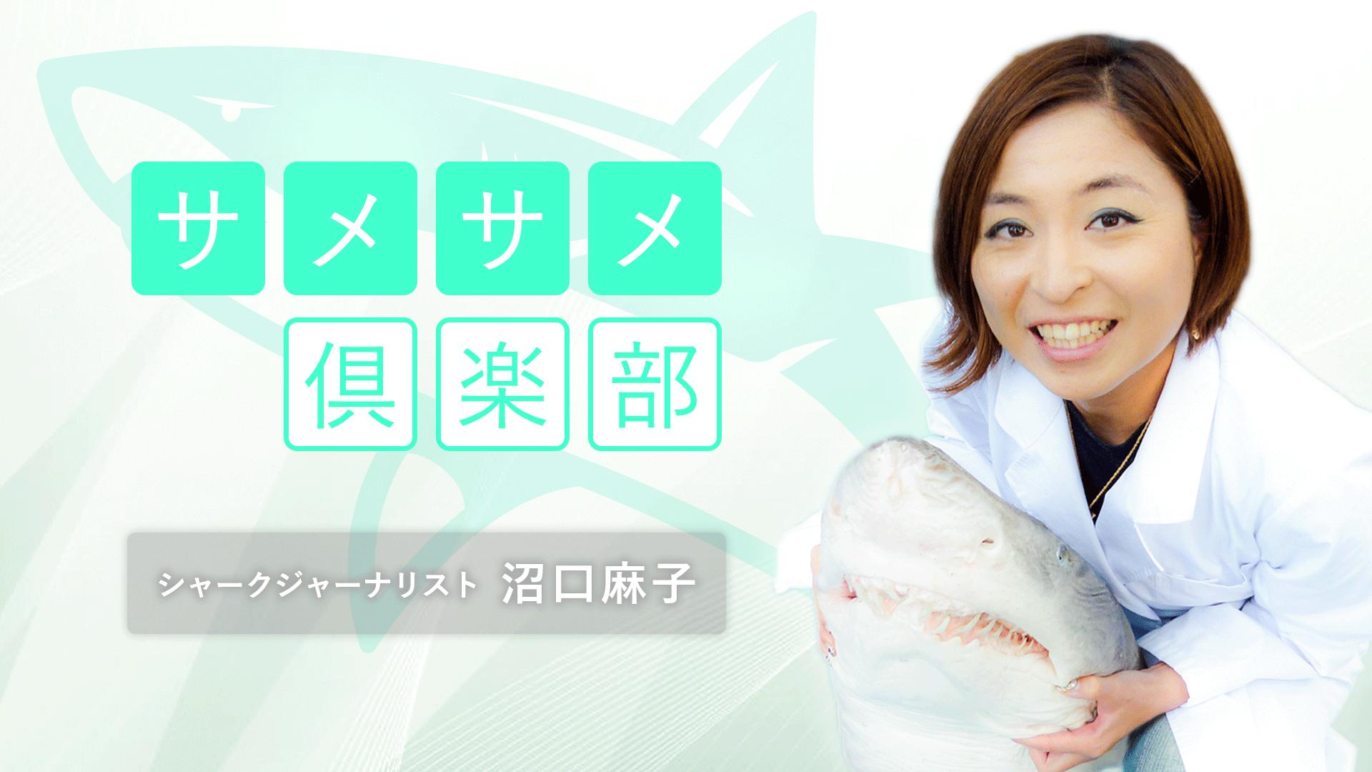 シャークジャーナリスト沼口麻子の「サメサメ倶楽部」