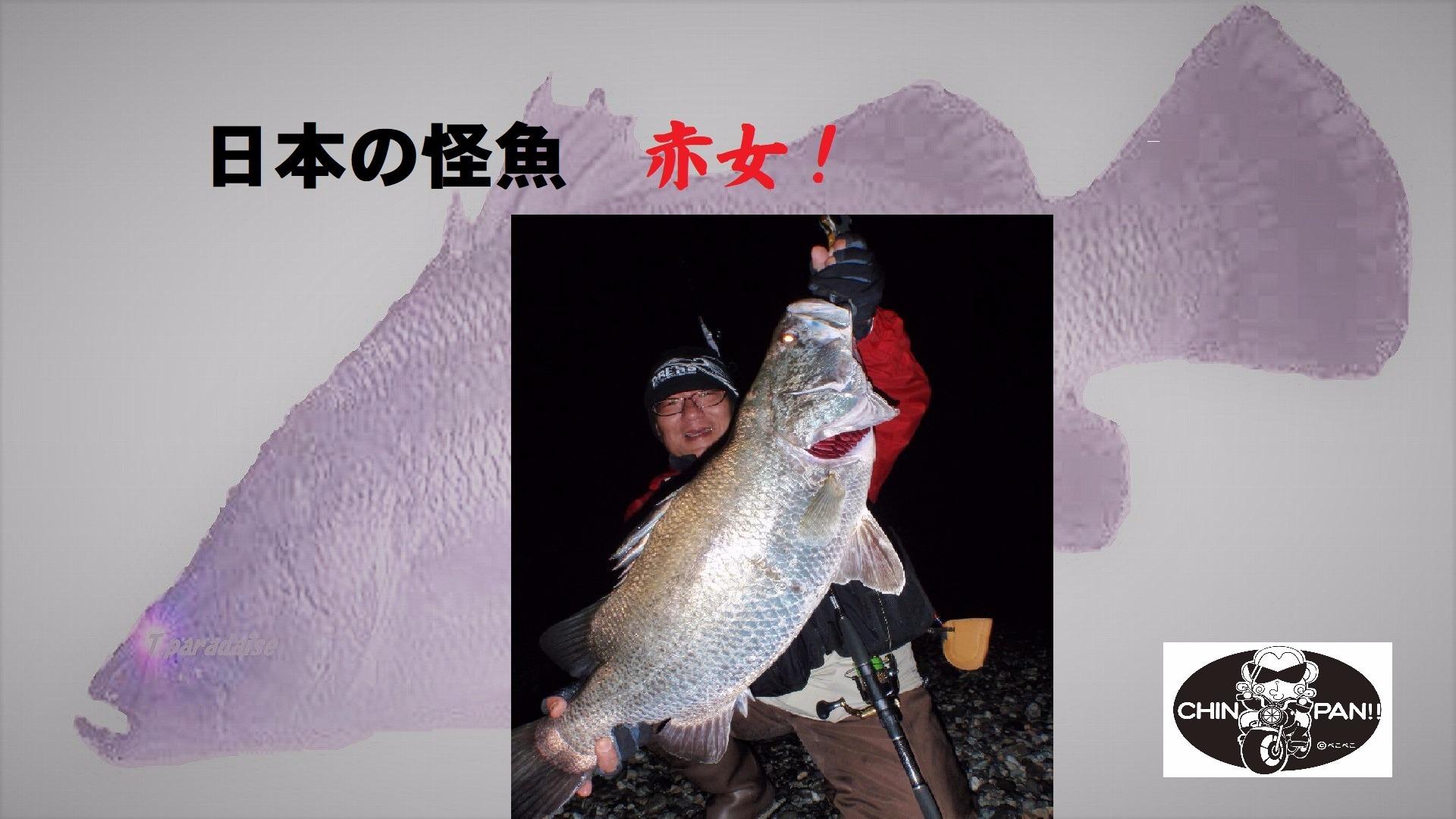 日本の怪魚 赤女!