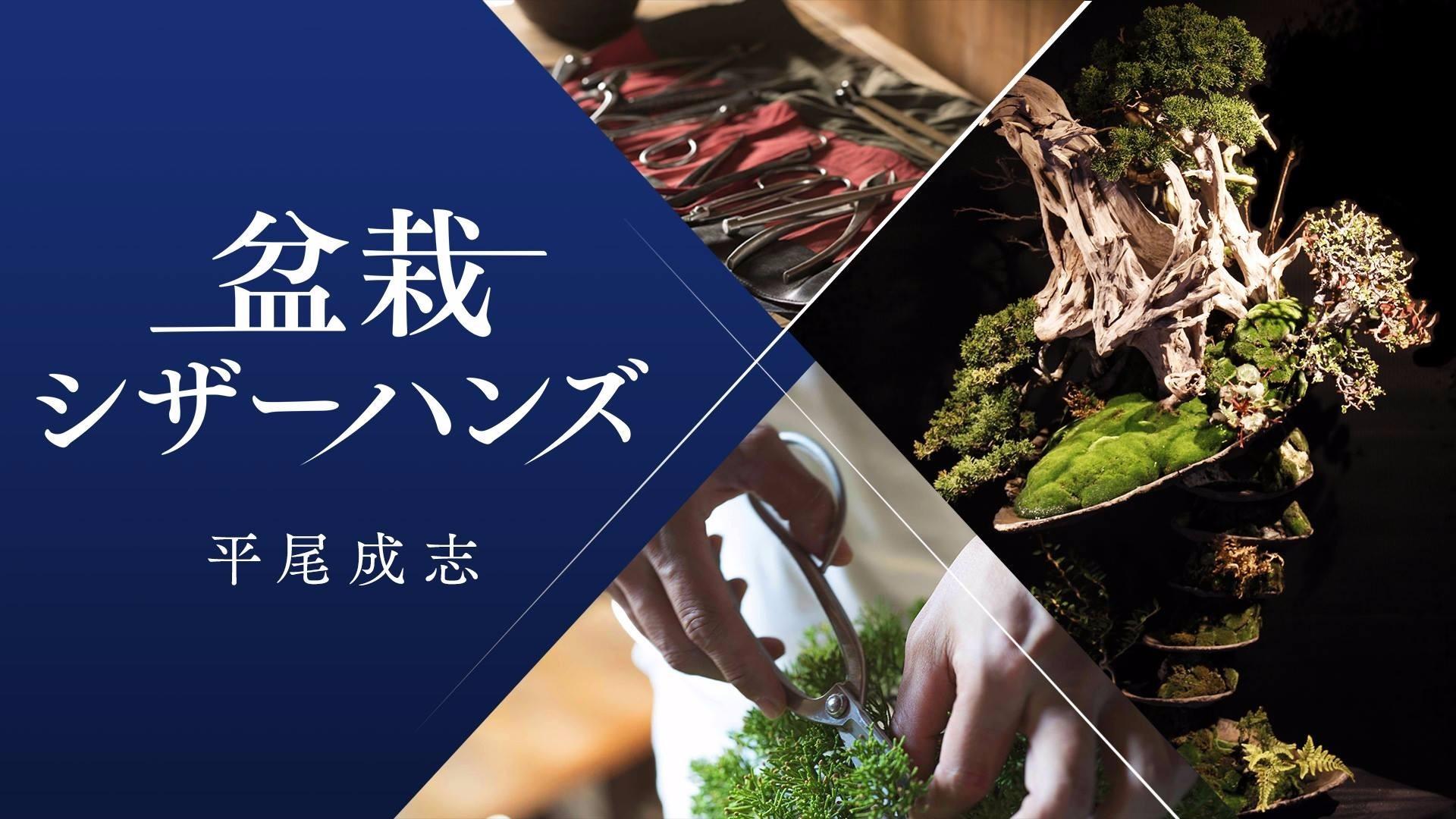 平尾成志(ひらおまさし) - 盆栽シザーハンズ - DMM オンラインサロン