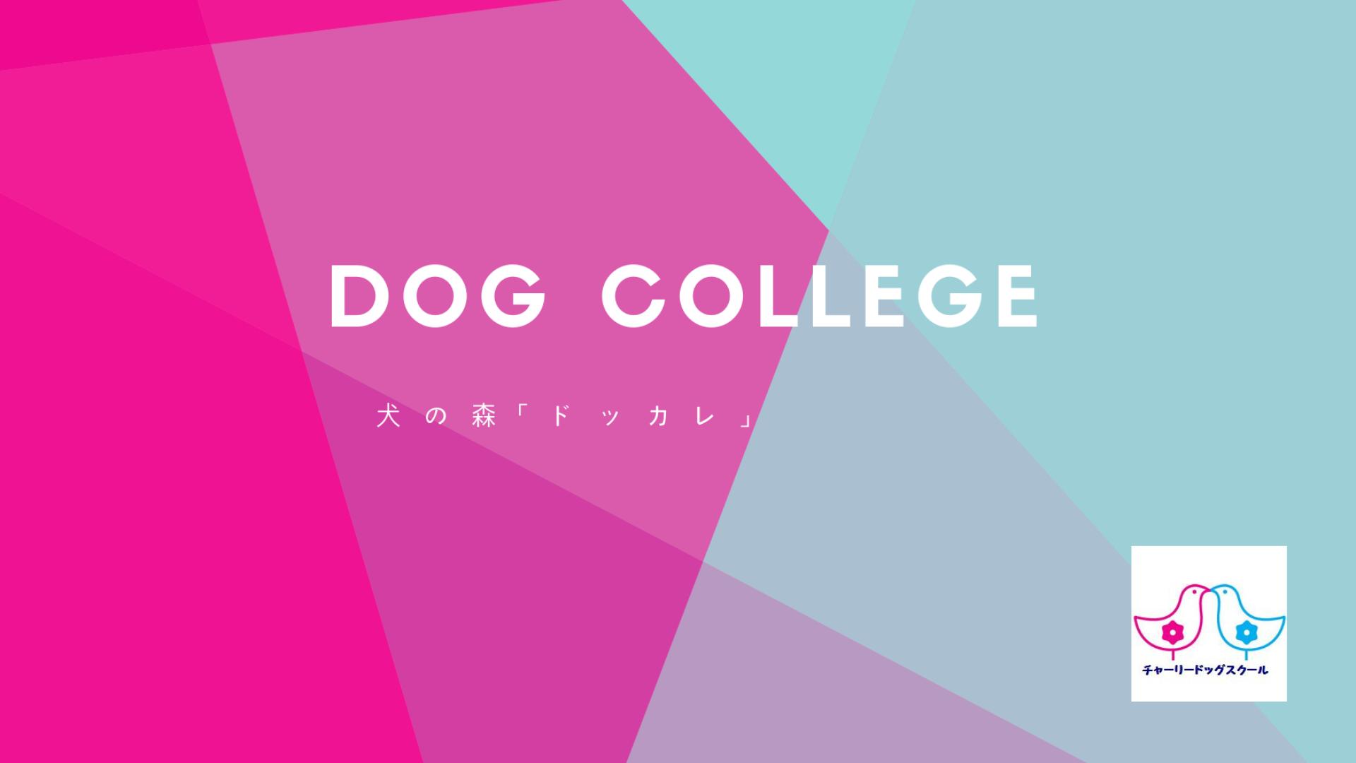 ドッグカレッジ 犬の森「ドッカレ」