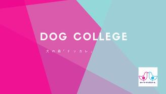 ドッグカレッジ 犬の森「ドッカレ」 夏目真利子