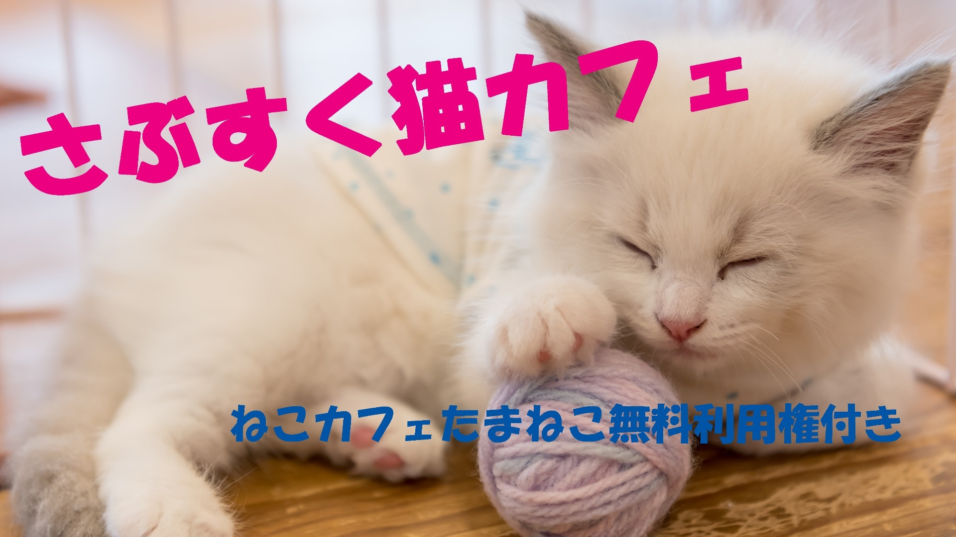 おばにゃん - さぶすく猫カフェ - DMM オンラインサロン