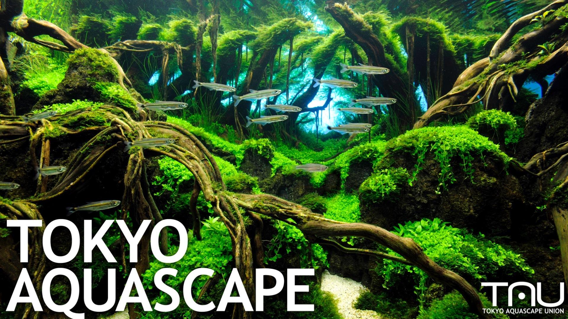 TAU(東京アクアスケープユニオン) - TOKYO AQUASCAPE - DMM オンラインサロン